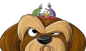 Los mejores ingredientes caseros contra las pulgas de tu perro