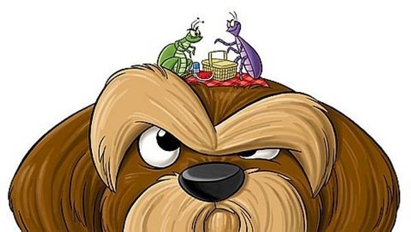 mejores-ingredientes-caseros-pulgas-perro