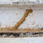 Cómo deshacerse de las termitas
