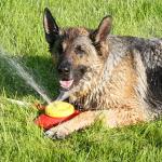 ¿Tu perro vive en el jardín? Aquí unos tips para cuidarlo