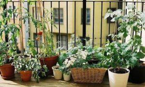 Plantas dentro de casa ¿SI O NO?