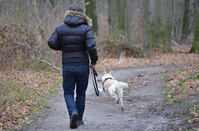 Qué ocurre si no saco a pasear mi perro